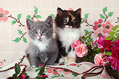 CAT 03 SJ0101 01