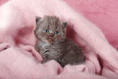 CAT 03 SJ0102 01