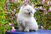 CAT 03 SJ0110 01