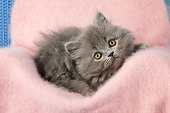 CAT 03 SJ0117 01