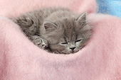 CAT 03 SJ0118 01