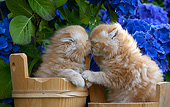 CAT 03 SJ0138 01