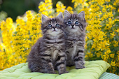 CAT 03 SJ0140 01