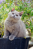 CAT 03 SS0027 01