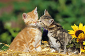 CAT 03 SS0029 01