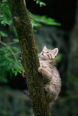 CAT 03 WF0003 01