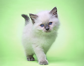 CAT 03 XA0005 01