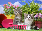CAT 03 XA0010 01
