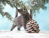 CAT 03 XA0011 01