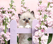 CAT 03 XA0012 01