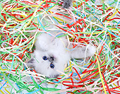 CAT 03 XA0013 01