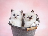 CAT 03 XA0014 01