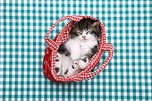 CAT 03 XA0018 01