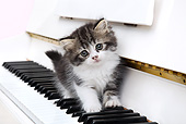 CAT 03 XA0019 01