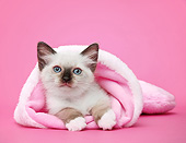 CAT 03 XA0020 01
