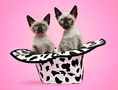 CAT 03 XA0027 01