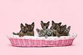 CAT 03 XA0028 01