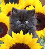 CAT 03 XA0030 01