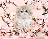 CAT 03 XA0033 01