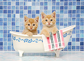 CAT 03 XA0037 01