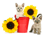 CAT 03 XA0040 01