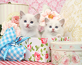 CAT 03 XA0042 01