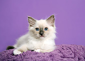 CAT 03 XA0045 01