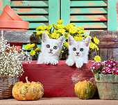 CAT 03 XA0047 01