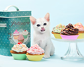 CAT 03 XA0054 01