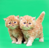 CAT 03 XA0056 01