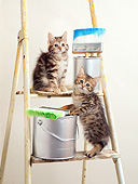 CAT 03 XA0059 01