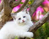 CAT 03 XA0061 01