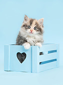 CAT 03 XA0062 01