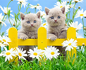CAT 03 XA0068 01