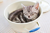 CAT 03 YT0021 01