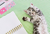 CAT 03 YT0026 01
