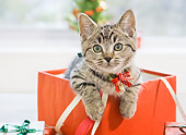 CAT 03 YT0027 01