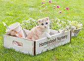 CAT 03 YT0033 01