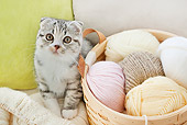 CAT 03 YT0034 01