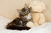 CAT 03 AL0003 01