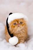 CAT 03 AL0029 01