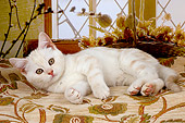 CAT 03 AL0033 01