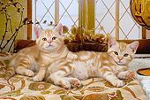 CAT 03 AL0034 01