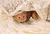 CAT 03 AL0035 01