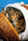 CAT 03 AL0038 01