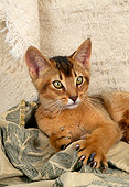 CAT 03 AL0043 01