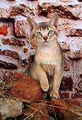 CAT 03 AL0050 01