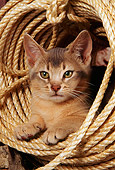 CAT 03 AL0051 01