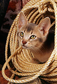 CAT 03 AL0052 01