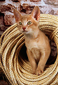 CAT 03 AL0053 01